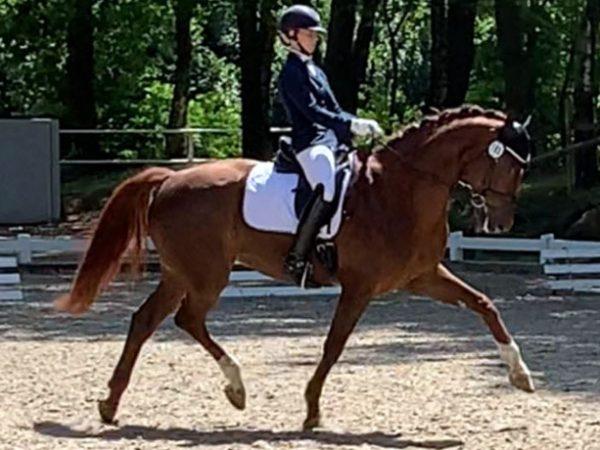Dritte der Dressurfperde L: Annika Schmelz mit ihrem Pferd Frieda Gold in der Prüfung